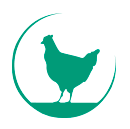 Pluimvee- en melkveebedrijf familie Nikkels