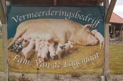 Varkenshouderij Van de Lagemaat