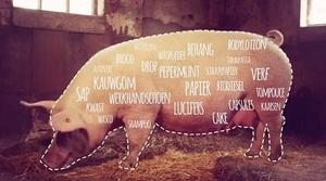 Film varkens horen bij Nederland succes
