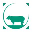 Vleesveebedrijf Ossekop, familie Denneboom