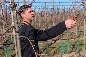 Fruitteeltbedrijf Arno Vernooij