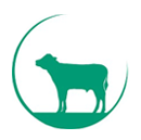 Vleeskalverhouderij Kok-Geuze VOF