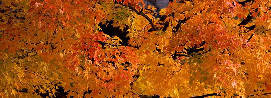 Autumn equinox yin yoga...