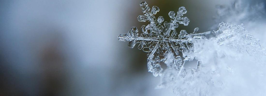 Winter Solstice Worksho...